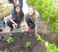 Planting in Slessor Gardens